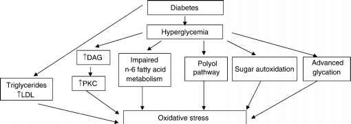 Pathophysiology Diabetic Polyneuropathy