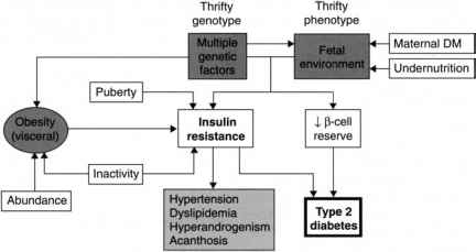 Pathophysiology Undernutrition