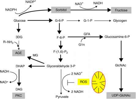 Polyol Pathway And Diabetes